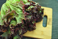 Red_leaf_lettuce