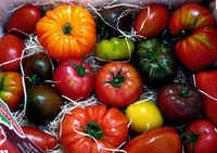 Variety_of_tomatoes
